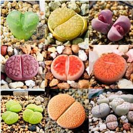 Семена 100шт Lithops Pseudotruncatella Сочные Семена необработанный камень семена цветов суккулентов Кактусы Семена # 1559