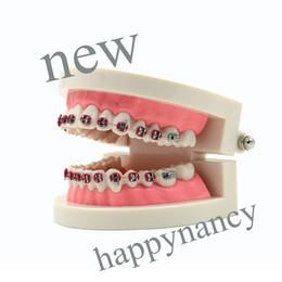 Wholesale BEST FASHIONABLE dental model Dental Orthodontic Standard Teeth Tooth Model METAL Brackets LIGATURE TIES for study and teaching