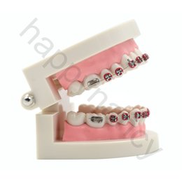 Wholesale Brand New PC dental model Dental Orthodontic Standard Teeth Tooth Model METAL Brackets LIGATURE TIES