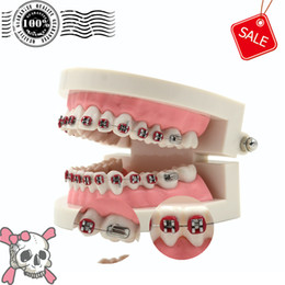 Wholesale Dental Orthodontic Standard Teeth Tooth Model METAL Brackets LIGATURE TIES Free Ship A model is worth for you