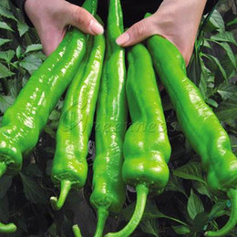 non-hybrid-100-giant-pepper-seeds-vegetable.jpg