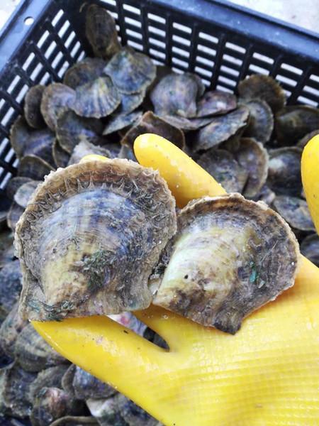 Соленой воды круглый Akoya Pearl Oyster 27 цветов смешанные цвета 6-8 мм культивированный Pea