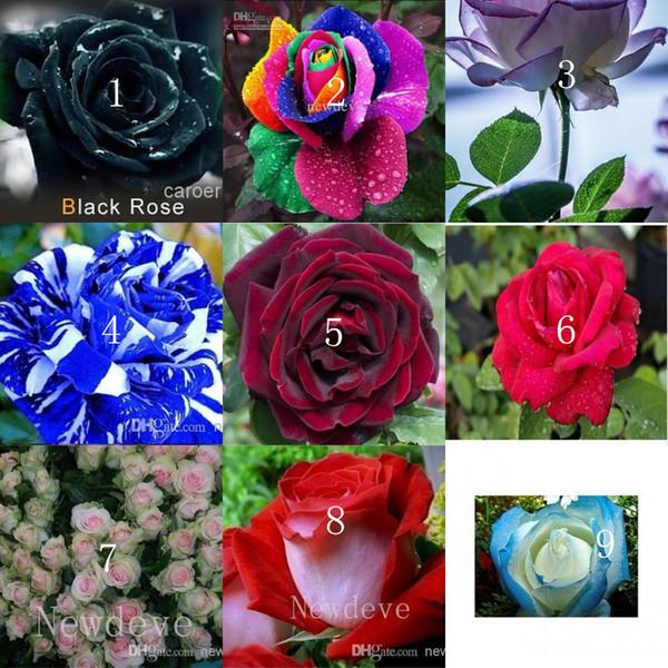 Цвета Роза Роза семян - Цвет 100 семян в пакет семена цветов Главная Сад Grow для украшения