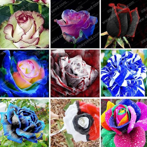 150 частиц большая коллекция всех видов редких семян роз многолетние цветы 12 сорто