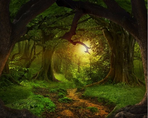 7x5FT сказочный лес дерево путь ствола корни пользовательские фотостудия фон винил
