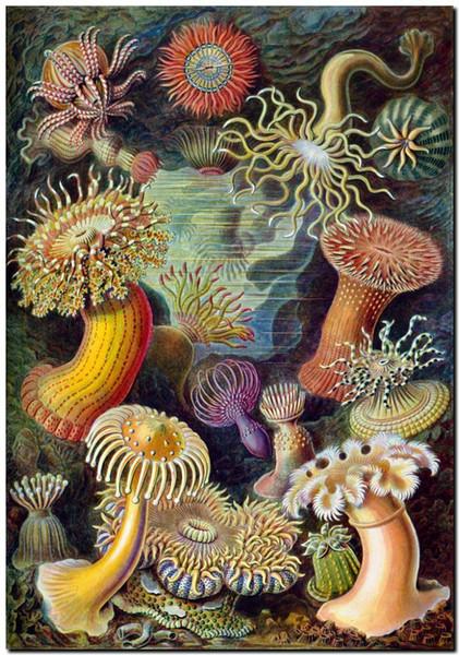 Эрнст Геккель нуво морской анемон Home Decor ручная роспись HD печать маслом на холсте стены искусства холст картины 191118 фото
