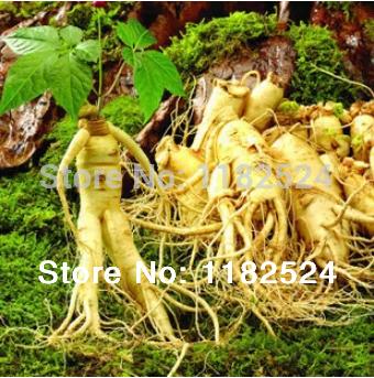 Cheap 100 Seeds - Chinese Hardy Panax Ginseng Korea Ginseng Seeds Herbs Seeds