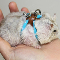 bell carrier - microgood Pet Rat Mouse Hamster Bird Ferret Adjustable Harness Lead Leash Collar Rope Bell Save up to