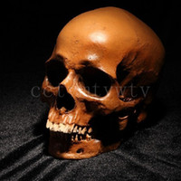 Wholesale Human Skull Replica Resin Model Medical Realistic x7x8 cm
