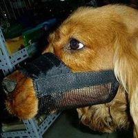 Wholesale Hot Selling Adjustable Dog Anti bark Muzzle Mesh Nylon Anti bite Muzzle Size S M L amp Drop Shipping