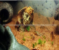 aquarium decorations ruins - ShanghaiMagicBox Classic Ancient Sphinx Ruins Aquarium Ornament Fish Tank Decoration