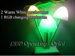 Wholesale colorful fantastic Avatar Mushroom wall LED Night Light simulate Nature environment for good sleeping for children kids family