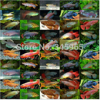automatic feeders - Magic fish high hatching eggs medaka eggs tropical fish eggs pet magic fish in bulk sale