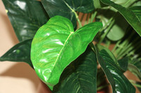 anthurium leaves - leaves Anthurium plants Artificial tree Artificial plants home decoration indoor plants