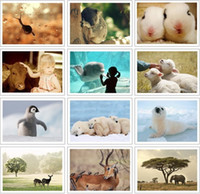 assorted greeting card sets - 32 quot The Nature of Pet quot Postcard Set Greeting Card Assorted Birthday Cards