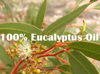 Wholesale pure skin care eucalyptus oil Beauty care Relieve nasal congestion and headache Eliminate muscle ache Famous brand
