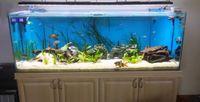 aquarium fresh - Fresh water tank w programmable aquarium led lamps for freshwater fish sunrise lunar cycle simulator daisy chain