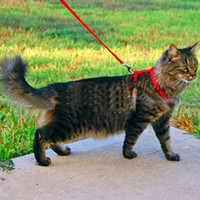 Wholesale PC Top Quality Adjustable Pet Cat Kitten Nylon Lead Leash Halter Collar Harness Clasp Belts Colors