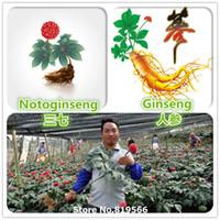 Cheap sementes home Best garden plants