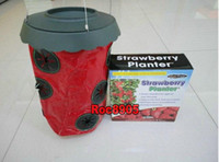 Wholesale holes Topsy Tnrvy Magic Suspended Strawberry Vegetable Planters Gardening Plants