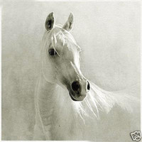 Wholesale Hand painted Oil Painting Art Abstract White Horse On Canvas No Framed