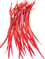 Wholesale 100pcs Red Color Mixed Stiff BEAUTIFUL Feather Hair Extension quot