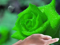 authorized green - Green Rose seeds rose seed per from Dhgate Authorized supplier