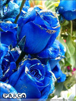 Wholesale blue Rose seeds rose seed per from Dhgate Authorized supplier