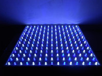 Wholesale Effective W Blue Aquarium Light with LED bulbs by DHL fast
