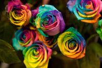Fashion 9 COLORS ROSE SEEDS Rainbow purple Red Black Red Whi...
