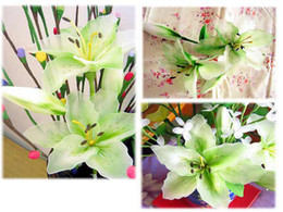 Wholesale New Arrival Lily Bulbs seeds from Authorized supplier