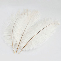 Wholesale Ostrich Feathers Home Decor White inch set