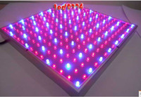 Wholesale Hot Selling W plant grow light lighting red blue