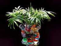Wholesale Magic Plant Jelly crystal Soil Mud Water Pearl Beads Water absorbing crystal polymer soil moist MED