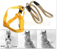 Wholesale Gold Pet Dog Puppy Lead Harness Pulling Leash Rope With Chest Strap Hot Sale New