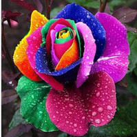 Wholesale DHL Rose seeds garden plants Multi Color rose seeds seed