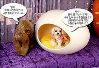 Wholesale Korea eggshell design Pet House HDPE comfort set non toxic plastic pet Kennel Colors