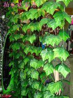 plastic vine - Simulation artificial green vines of grape Winding vine flowers Home Decor m m