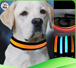 Newest Pet Dog Safety Collar LED Light-up Flashing Glow in the dark necklace Collars free shipping