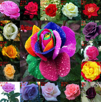 Wholesale 18 Colors Rose Seeds Rainbow Rose Seeds Color Rose Flower Seeds Garden Plants Seeds