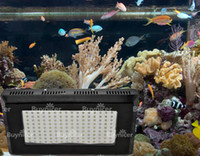 Wholesale 300W Tropical Fish Reef LED Aquarium Lights Watte Lighting Supplies day Fast Ship