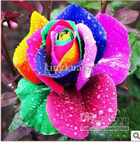 Wholesale 2012 hot selling Colorful roses seeds Rainbow roses seed colours beautiful rose seed