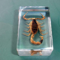 Wholesale Natural Insect Specimen Real Insect Amber Lucite Sample Scorpion mm mm mm High Quality The Best Collection