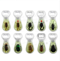 Wholesale New Raindorp Shape Insect Amber Beer Bottle Opener Resin Souvenir Gift for Wedding Favors