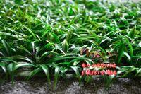 artificial grass mat - Simulation grass Artificial plastic grass mat Rectangle Grass mat home wedding decoration