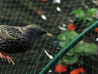 Wholesale Anti Bird Netting