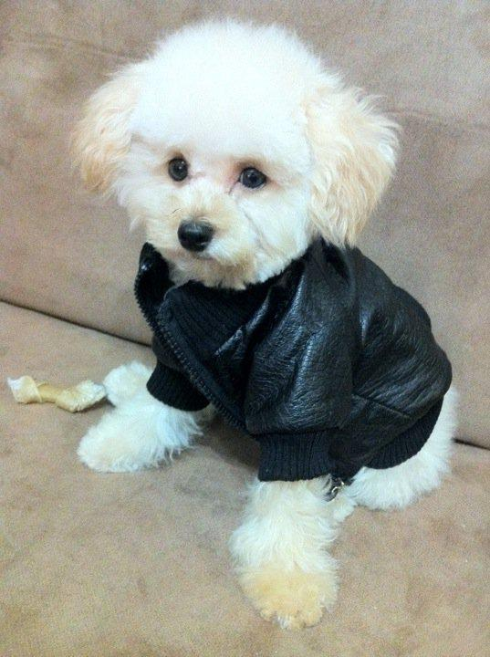 Leather jackets for dogs
