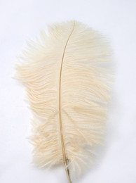 wholesale 100pcs per lot 12-14inch High Quality IVORY OSTRICH FEATHERS for centerpieces
