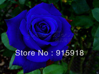 Wholesale NOW BUY ONE GET ONE FREE GET Seeds Chinese Blue Rose Seeds Your Lover Plant For