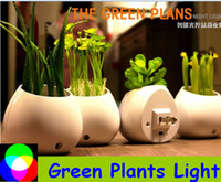 Wholesale Green Plants light decoration light gift light colorful light four types plants Aloe Clover Money Grass Cactus holiday light